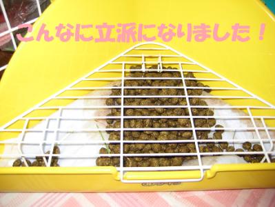 IMG_うんち0468