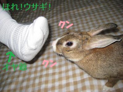 IMG_足0453