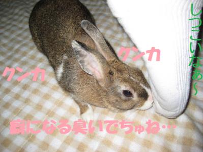 IMG_足0454