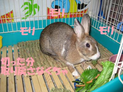 IMG_食事0494