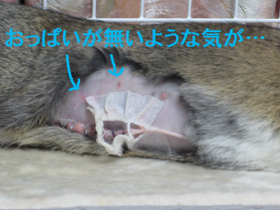 IMG_2きず0427
