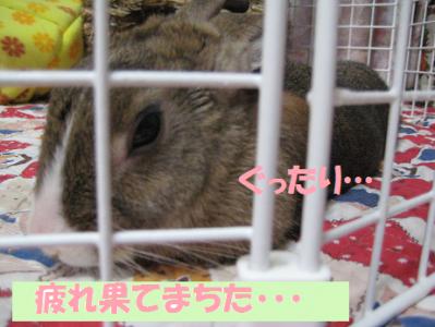 IMG_疲れ0550