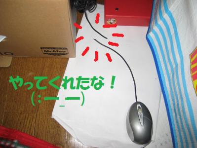 IMG_マウス0593