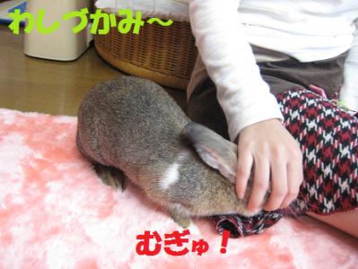 IMG_こころ0622