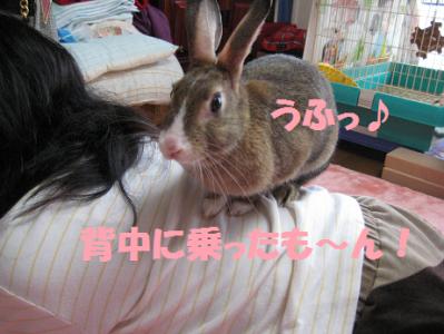 IMG_こころ0628