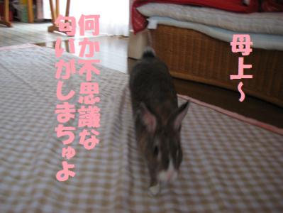 IMG_匂い0741