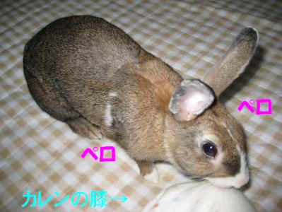 IMG_舐めウサ0778