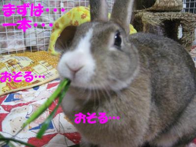 IMG_草0792
