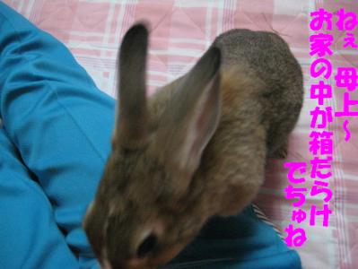 IMG_甘え0825