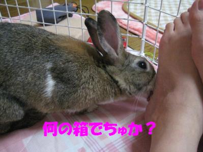 IMG_舐め0823