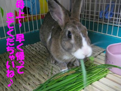 IMG_牧草0883