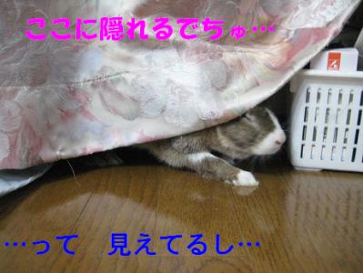 IMG_いたずら1042