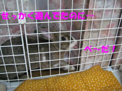 IMG_あかんべ~1038