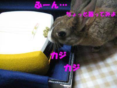 IMG_三味線1013