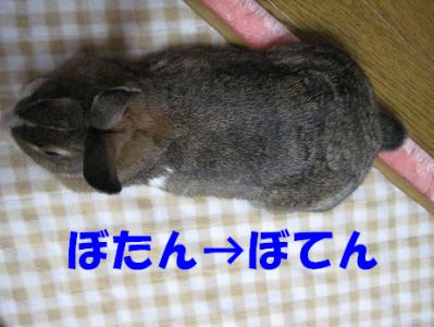 IMG_ぼてん1116