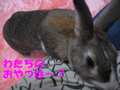 IMG_おねだり1504
