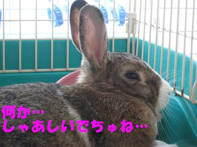 IMG_うるさい1485