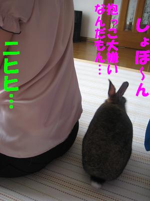 IMG_きたよ2154