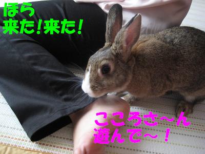 IMG_きたよ2156