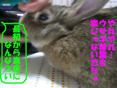 IMG_きたよ2123