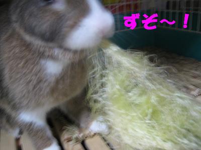 IMG_ひげ2220