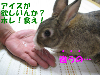 IMG_おねだり2316