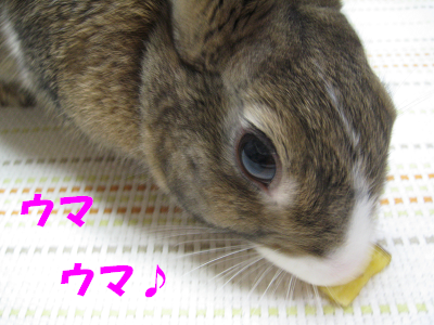 IMG_おねだり2324