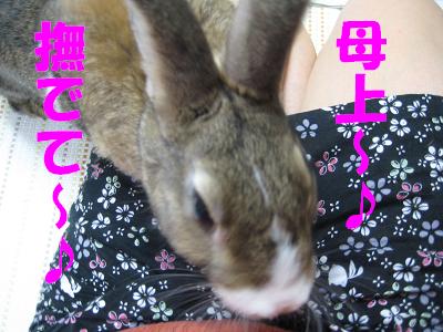 IMG_甘え2336