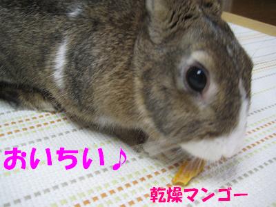 IMG_おみやげ2366