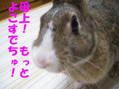 IMG_おみやげ2449