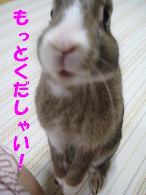 IMG_おみやげ2451