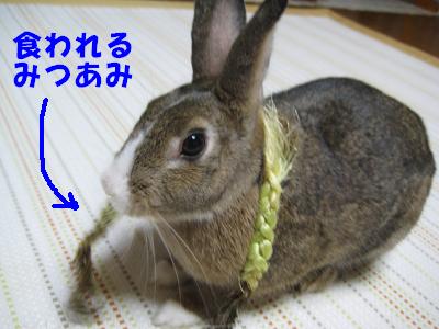 IMG_みつあみ2583