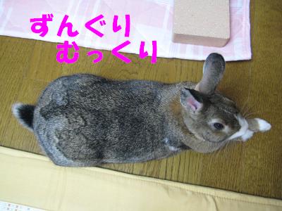 IMG_冷え2620