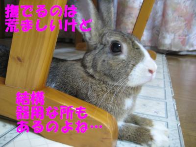 IMG_ぼた2984
