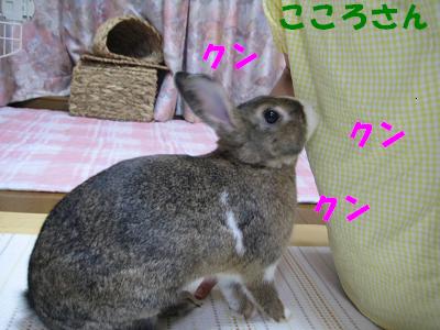 IMG_こころ3082