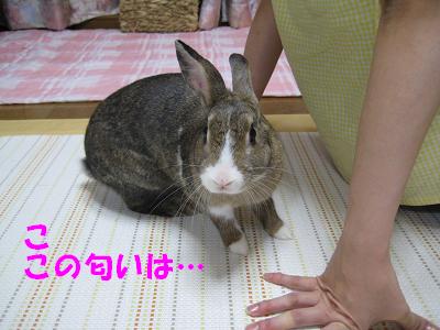 IMG_こころ3084
