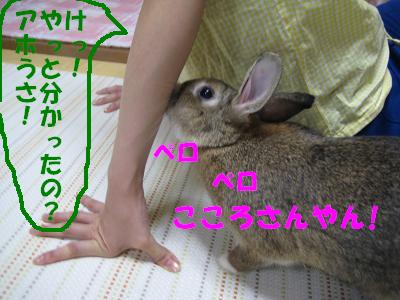 IMG_こころ3086