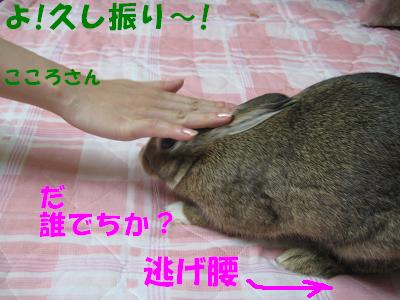 IMG_こころ3090
