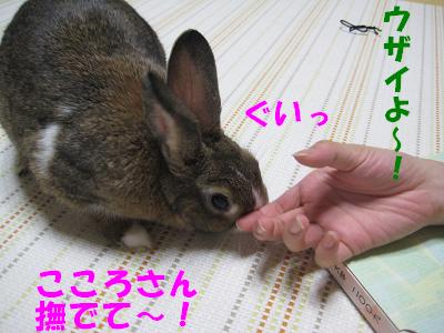 IMG_こころ3091