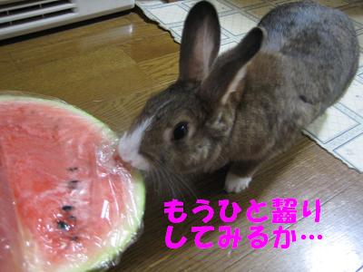 IMG_すいか3121