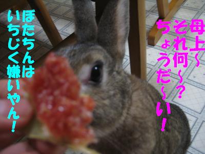 IMG_いちじく3271
