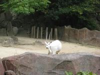 IMG_動物園3606