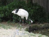 IMG_動物園3674