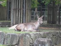 IMG_動物園3675