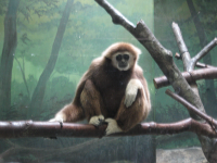 IMG_動物園3676