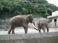 IMG_動物園3682