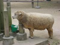IMG_動物園3685
