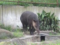 IMG_動物園3691