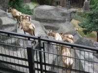 IMG_動物園3692