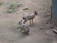 IMG_動物園3694